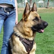 K9 LEATHER TRACKING HARNESS